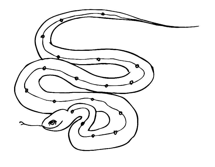 Змеи картинки раскраски (26)