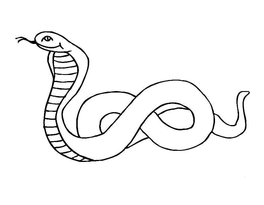 Змеи картинки раскраски (27)