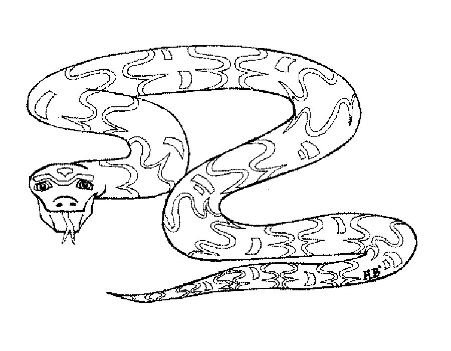 Змеи картинки раскраски (8)