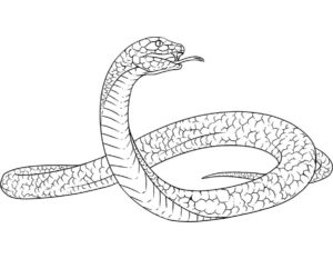 Змеи картинки раскраски (9)