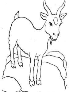 Коза картинки раскраски (11)