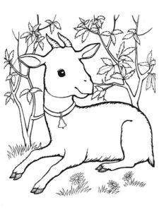 Коза картинки раскраски (13)