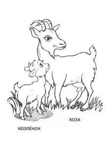 Коза картинки раскраски (2)