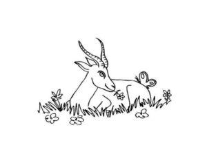 Коза картинки раскраски (20)