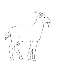 Коза картинки раскраски (23)