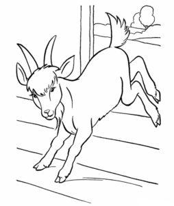 Коза картинки раскраски (3)