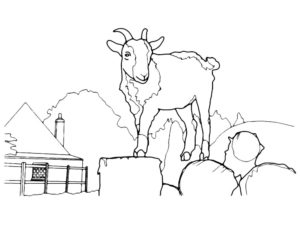 Коза картинки раскраски (5)