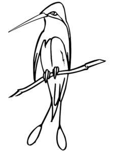 Колибри картинки раскраски (1)