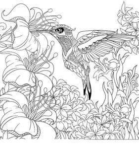 Колибри картинки раскраски (10)