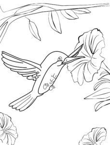 Колибри картинки раскраски (11)