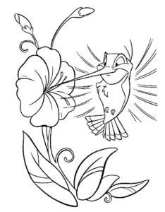 Колибри картинки раскраски (12)