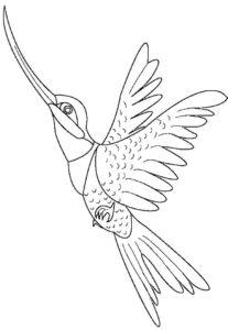 Колибри картинки раскраски (14)