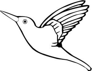 Колибри картинки раскраски (17)