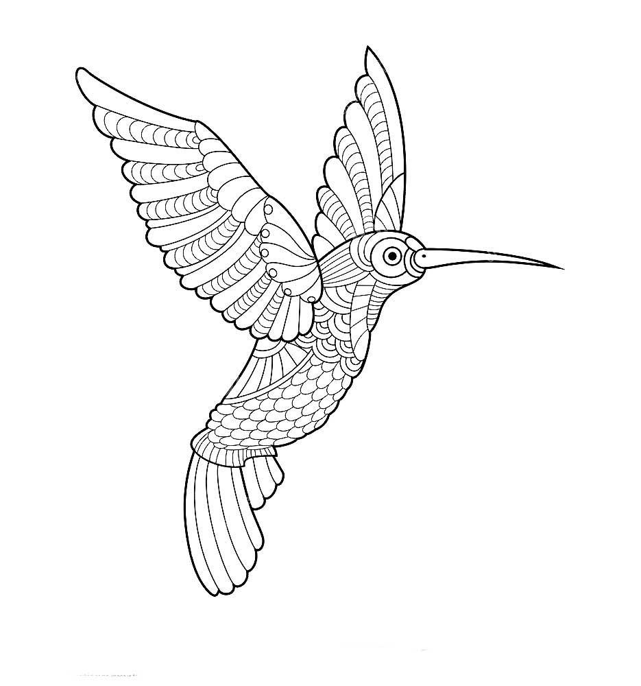 Колибри картинки раскраски (19)