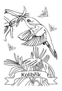 Колибри картинки раскраски (2)