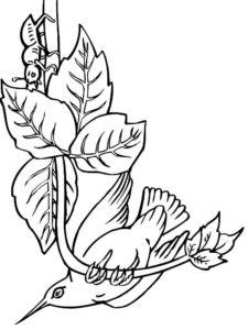 Колибри картинки раскраски (21)
