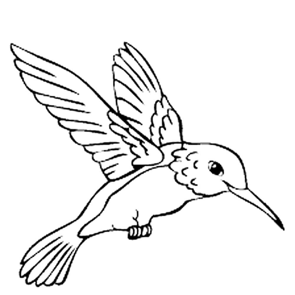 Колибри картинки раскраски (22)