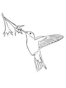 Колибри картинки раскраски (26)