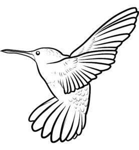 Колибри картинки раскраски (28)