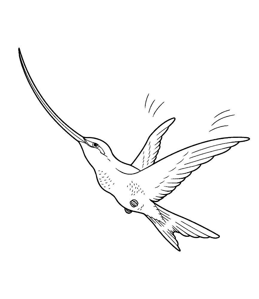 Колибри картинки раскраски (7)