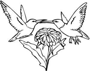 Колибри картинки раскраски (9)