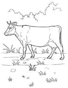Корова картинки раскраски (10)