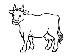 Корова картинки раскраски (13)