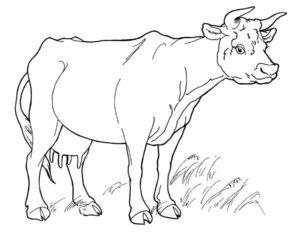 Корова картинки раскраски (7)