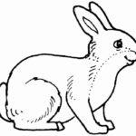 Кролик картинки раскраски (10)