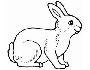 -картинки-раскраски-10-300x233 Кролик