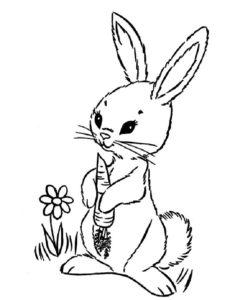 Кролик картинки раскраски (18)