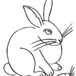 Кролик картинки раскраски (2)