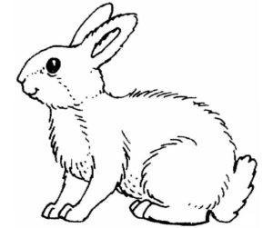 Кролик картинки раскраски (5)