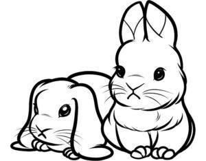 Кролик картинки раскраски (7)