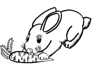 Кролик картинки раскраски (8)