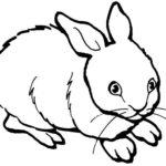 Кролик картинки раскраски (9)