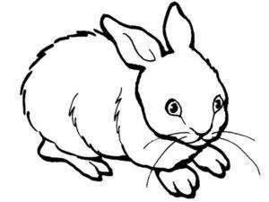-картинки-раскраски-9-300x225 Кролик