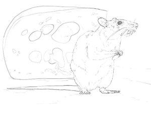 Крыса картинки раскраски (12)
