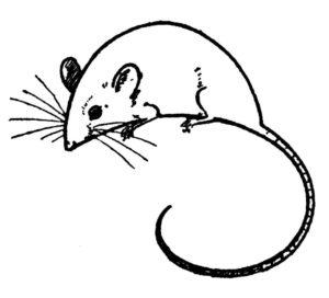 Крыса картинки раскраски (14)