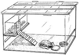 Крыса картинки раскраски (15)