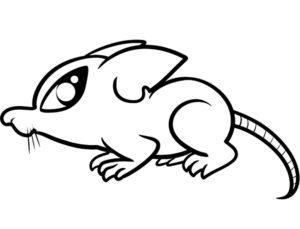 Крыса картинки раскраски (18)