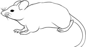 Крыса картинки раскраски (2)