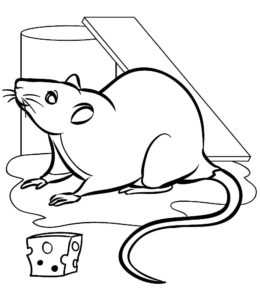 Крыса картинки раскраски (20)