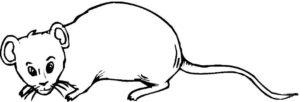 Крыса картинки раскраски (28)