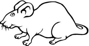 Крыса картинки раскраски (33)