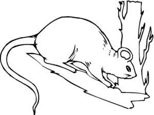 Крыса картинки раскраски (40)