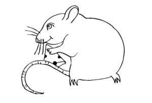 Крыса картинки раскраски (43)