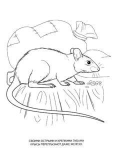 Крыса картинки раскраски (51)