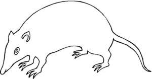 Крыса картинки раскраски (6)