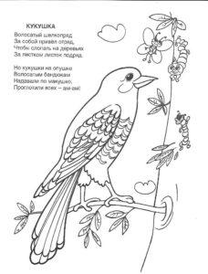 Кукушка картинки раскраски (12)